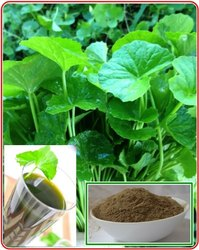 Gotu Kola Powder (Centella Asiatica/Mandukaparni) Internal & External Purpose
