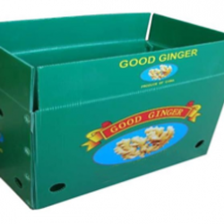 Bubblefine polypropylene bubble guard vegetable box, For Packaging