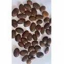 Parkia Biglobosa Seed