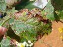MaxEEma Bio Fungicide Plant Protection Range