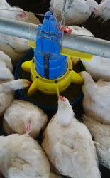 Automatic Pan Feeding System