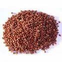 Red Sorghum Grain