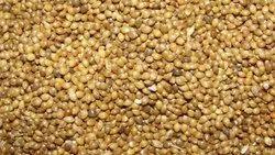 Kgs Dark Yellow Proso Millet, Organic
