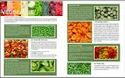 A Grade Green Iqf Frozen Vegetable, Gunny Bag, Packaging Size: 20 Kg