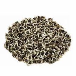 Moringa Tree Seeds - Moringa oleifera