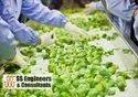 Vegetables / Groceries Packaging, Weighing & Labeling Machine