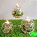 Glass Globe Stand Terrarium