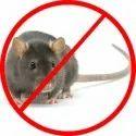 Rat Control Treatment Service