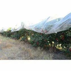 Pomegranate Crop Cover