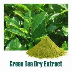 Green Tea Dry Extract