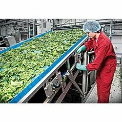 Vegetable Inspection Conveyor