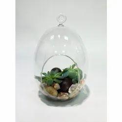 Hanging Oval Glass Terrarium