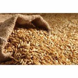 Golden Emmer Wheat Grain