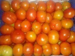 Tamil Nadu Indian Fresh Tomato