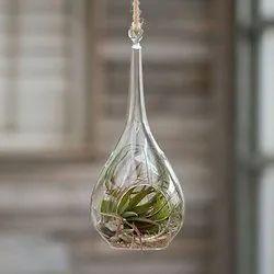 Glass Raindrop Terrarium