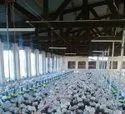 Poultry Pan Feeding System