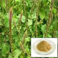 Apamarg Dry Extract
