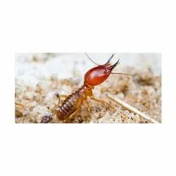 Commercial Chemical Treatment Ants Control Service