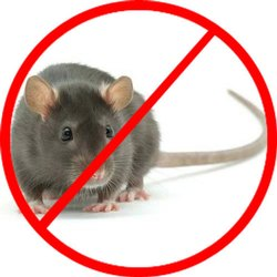 One Time Residential Rodent Pest Control Services, Local