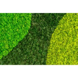Green Moss Bio Wall, For Office Decor
