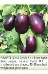 Hybrid Purple Prapti(Chu Chu ) F1, Packaging Type: PP , Packaging Size: 10G