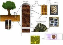 Mycorrhiza VAM Technical Powder for Repack