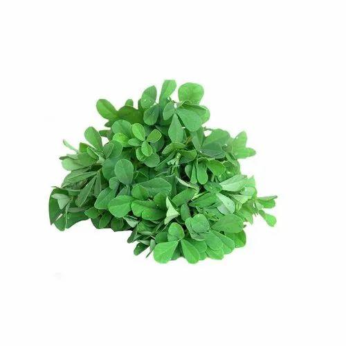 A Grade Green Fresh Fenugreek Leaves, Is It Dried: Dried, Packaging Size: 10kg(Maximum), Rs 30 /kg | ID: 22925743588
