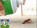 Industrial Spray Best Control Treatment For Cockroaches