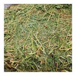 Alfalfa Hay, Packaging Type: Plastic Sack Bag, 5 Kg
