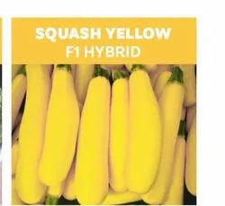 Square Yellow F1 Hybrid Seeds, For Agriculture, Packaging Size: 10 Gram