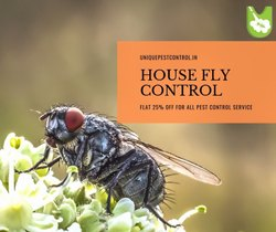 House Flies Control Service