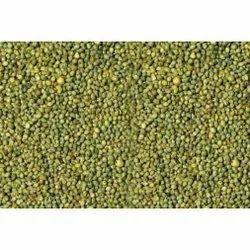 25 Kg Green Millet Bajra
