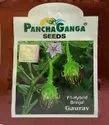 Panchaganga Brinjal Seed Gaurav, Pack Size: 10 Gm