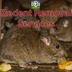 Rodent Removal Service