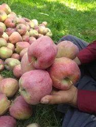 A Grade Fresh Shimla Apple, Packaging Size: 20 Kg, Packaging Type: Carton