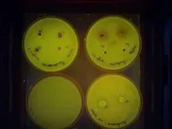 Algae Identification service