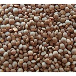 Masoor, Packaging Type: Jute Bag, Packaging Size: 50 Kg