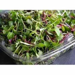 Vibgyor Consist Microgreens