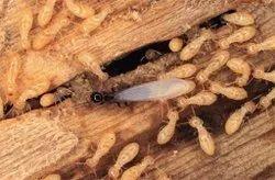 Chemical based Anti Termite Treatment