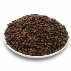 Cassia Tora Seeds Panwar Seed, Packaging Type: Aluminum Bottle