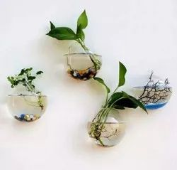 Aesthetic Planting Glass Hanging Pot
