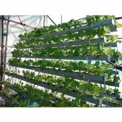 Hi-Tech NFT Hydroponic Farming Consulting Services