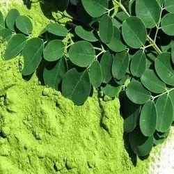 Moriga leaf powder