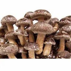 Dried Mushroom Dry Mushroom shiitake mushrooms, Carton