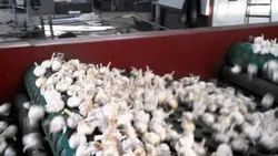 Garlic Processing Project Report Consultancy