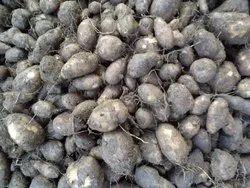 A Grade Fresh Koorka, Gunny Bag, 20 Kg