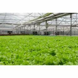 Hi-Tech Nursery Farming Consulting Services