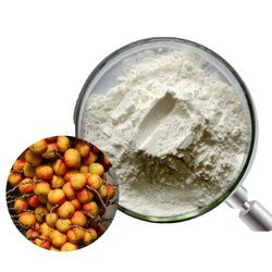 Saw Palmetto Powder, Packaging Type: 25 Kg Hdpe Drum, Packaging Size: 25 Kg Hcpe Drum
