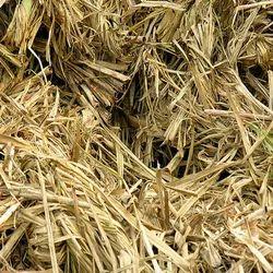 Sugarcane Bagasse or sugarcane spent