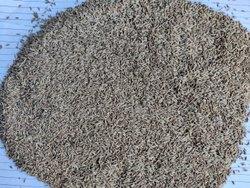 Cumin Seeds Sortex Clean